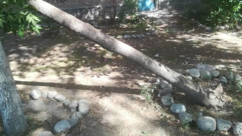 На ул.Месароша может упасть дерево, - очевидец