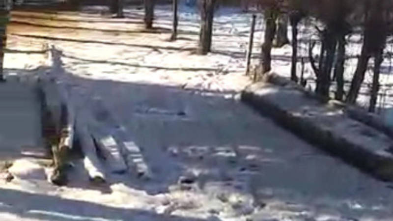 На территории курорта Жыргалан вырубают ели, вокруг много мусора. Видео местного жителя