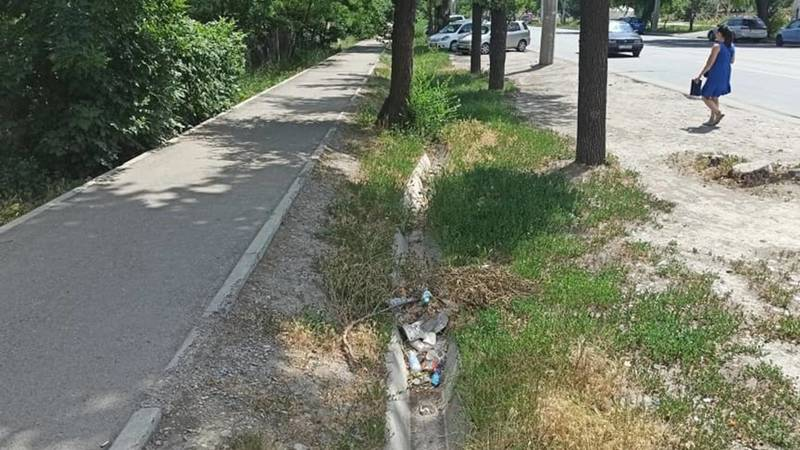 На ул.Анкара высыхают и болеют дубы. Фото горожанина