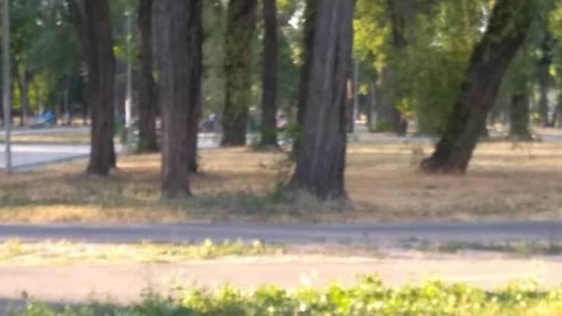 В парке имени Тулебердиева выгорела трава. Фото