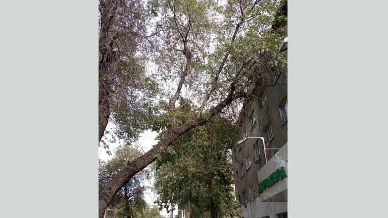 На ул.Киевской ветки деревьев падают на головы прохожим, - жители