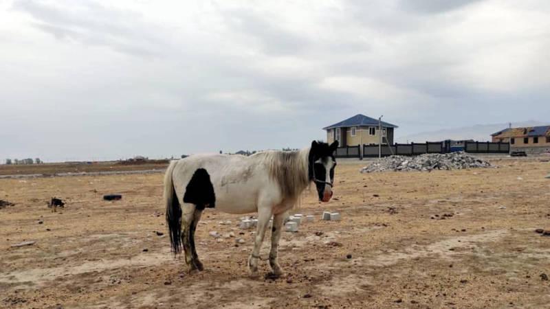 Владелец лошадей, которые паслись на Ахунбаева, оштрафован на 3 тыс. сомов