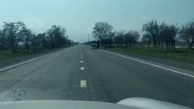 На трассе Бишкек — Ош машина насмерть сбила корову. Видео
