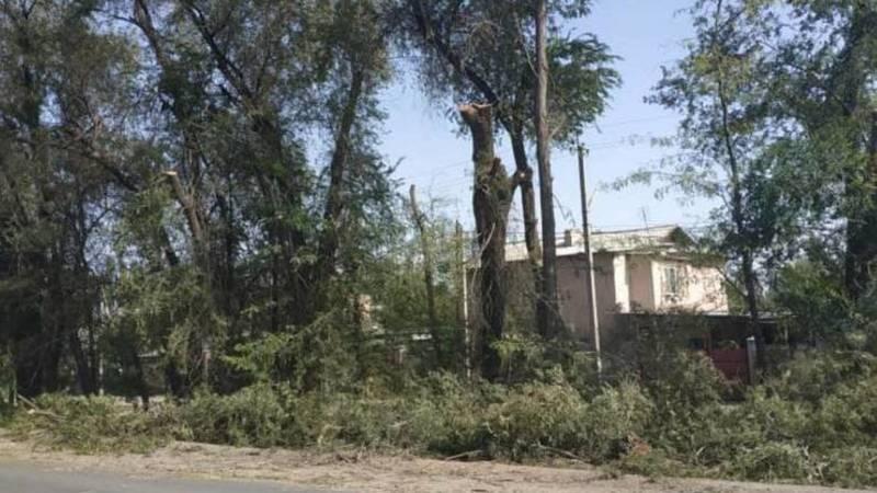 В селе Пригородное вырубают зеленые насаждения. Фото