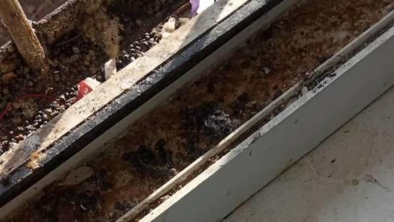 «Остатки насвая и крови». Горожанин жалуется на грязные окна УВД Октябрьского района. Фото
