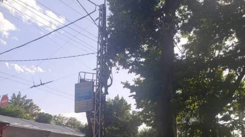 «Бишкекзеленхоз» убрал ветки на проводах на Московской. Фото и видео