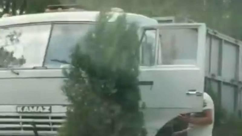 Патрульная милиция ищет водителя грузовика, наехавшего на деревья на магистрали