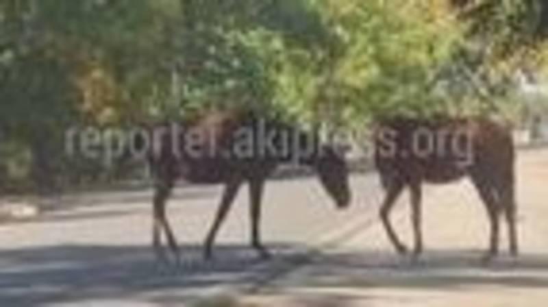 Лошади гуляют на дорогах без присмотра. Фото