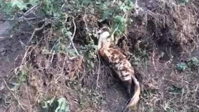 Житель Ноокатского района на своем приусадебном участке обнаружил животное из Красной книги. Фото