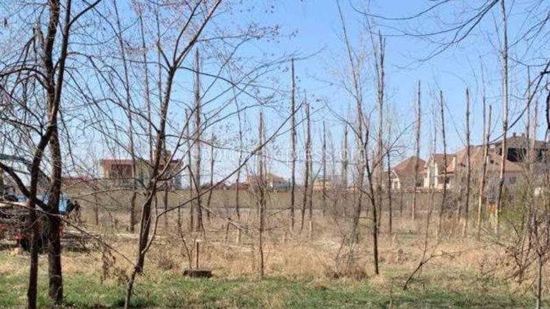 На Ч.Айтматова-Ы.Абдрахманова рубят молодые деревья, которые остались без полива и засохли (фото)
