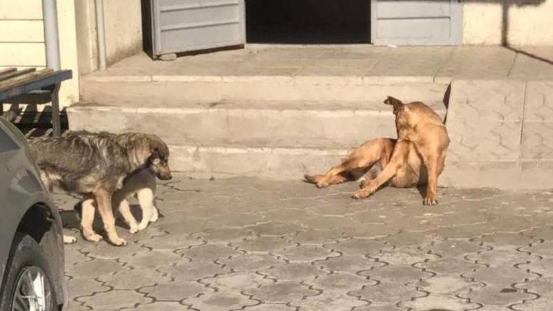 Жительница мкр Солнечный жалуется на бродячих собак