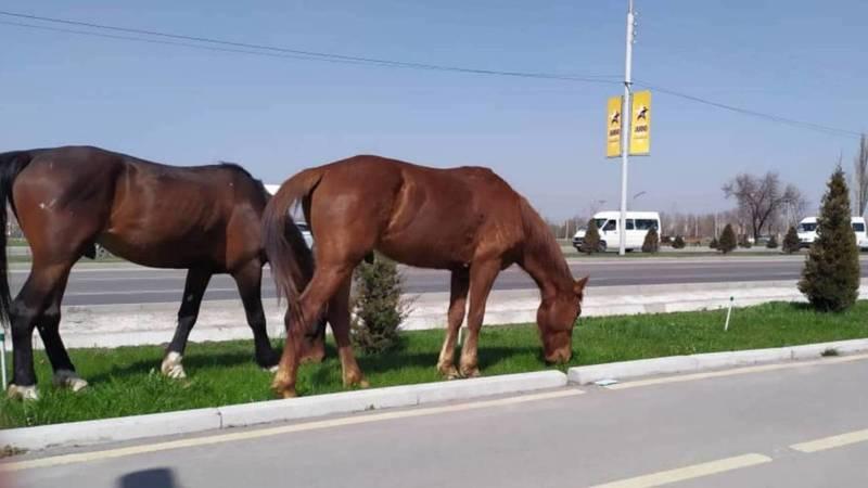 На Южной магистрали продолжают пасти лошадей. Фото