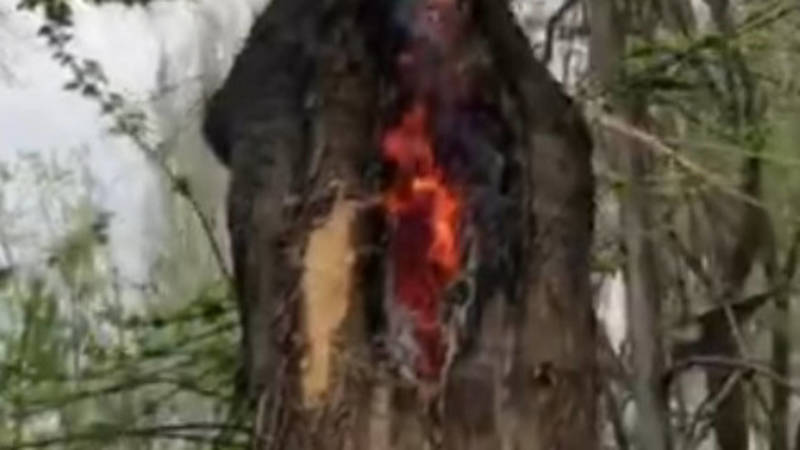 В Карагачевой роще горит дупло дерева. Видео