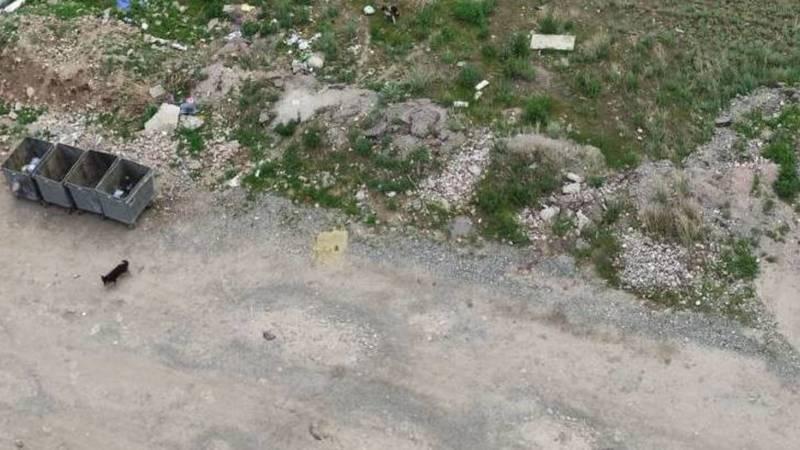 Бишкекчанка жалуется на бродячих собак на Южной магистрали. Фото