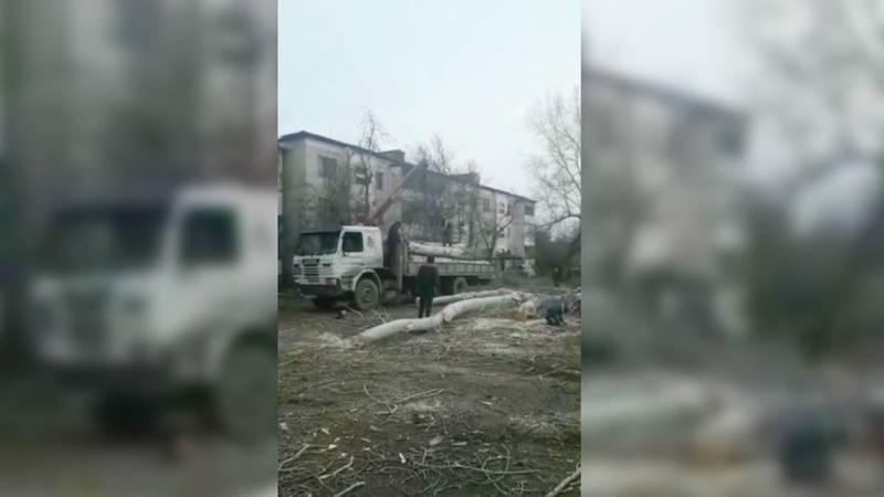 Видео — В городе Каинды вырубают деревья
