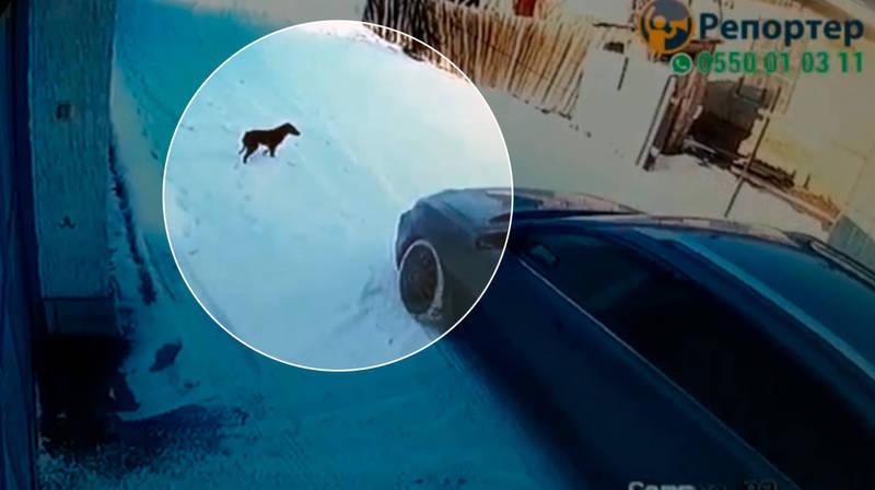 Водитель «Тойоты» безжалостно задавил щенка. Видео
