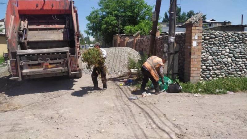 На Манаса-Васильева мусор вывозится раз в неделю, - мэрия. Фото