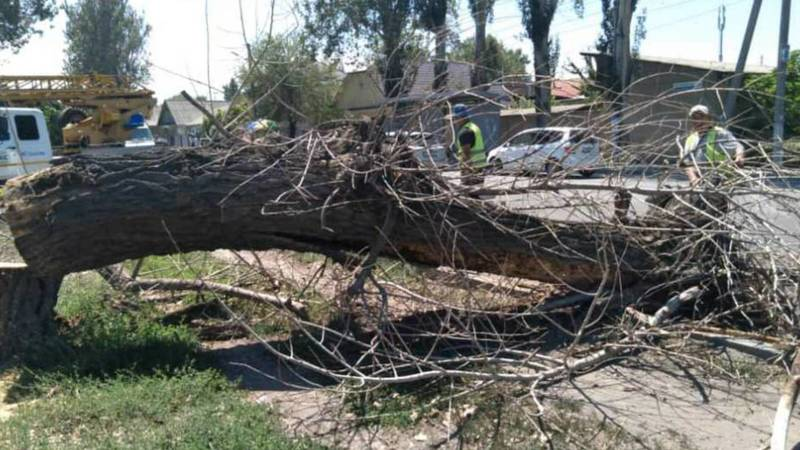 Аварийное дерево на ул.Тоголок Молдо спилено