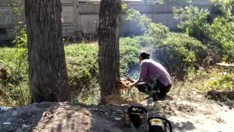 В Нижней Ала-Арче спилили тополя. Законно ли? - местная жительница