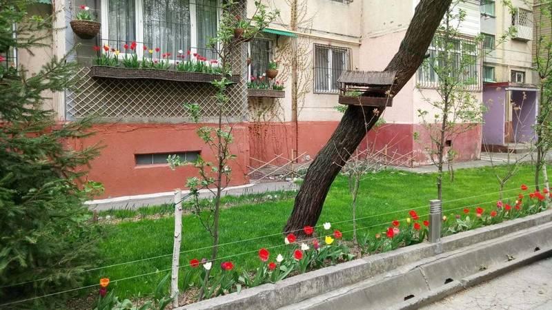 Житель 11 мкр разбил клумбы и посадил тюльпаны. Фото