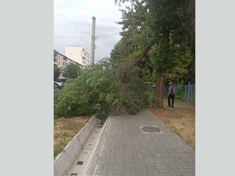 На Тыныстанова упавшее на тротуар дерево до сих не убрали, - очевидец