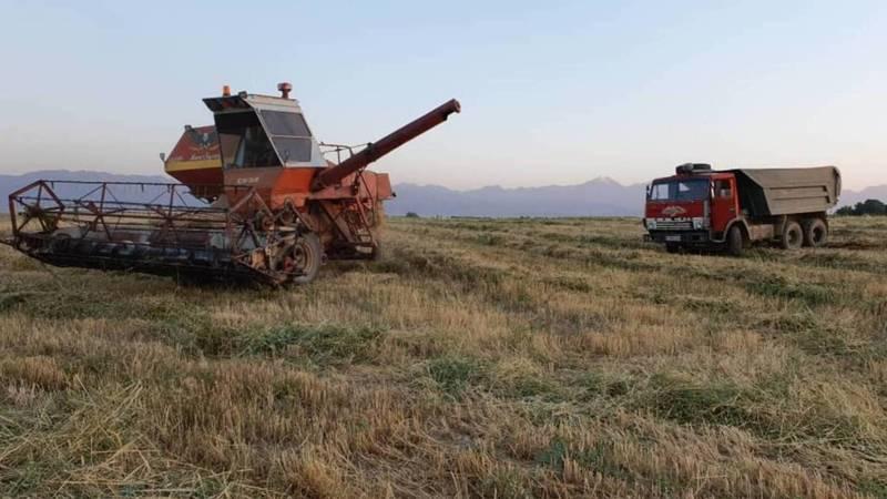 В Таласской области начали сбор пшеницы. Фото