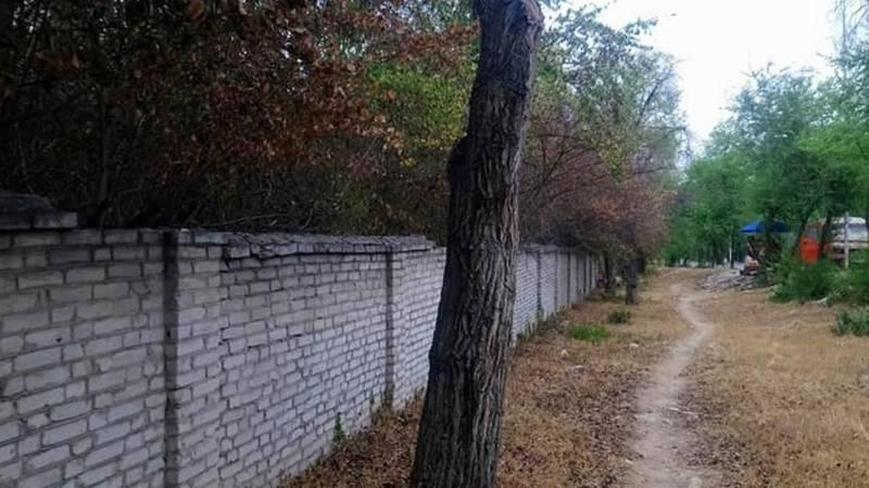 Мы теряем Ботанический сад, он засыхает, - бишкекчанка (фото)