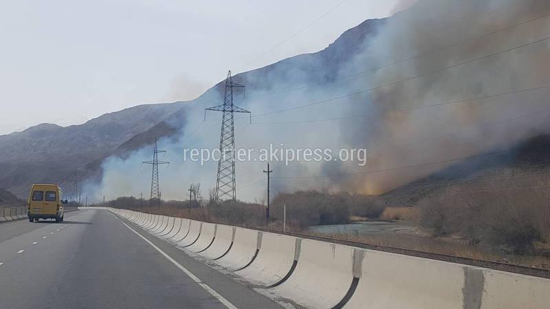 Пожар в Боомском ущелье. Горят пойменные леса вдоль реки Чу (видео)