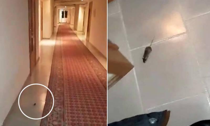 В номерах пансионата «Кыргызское взморье» бегает мышь. Видео