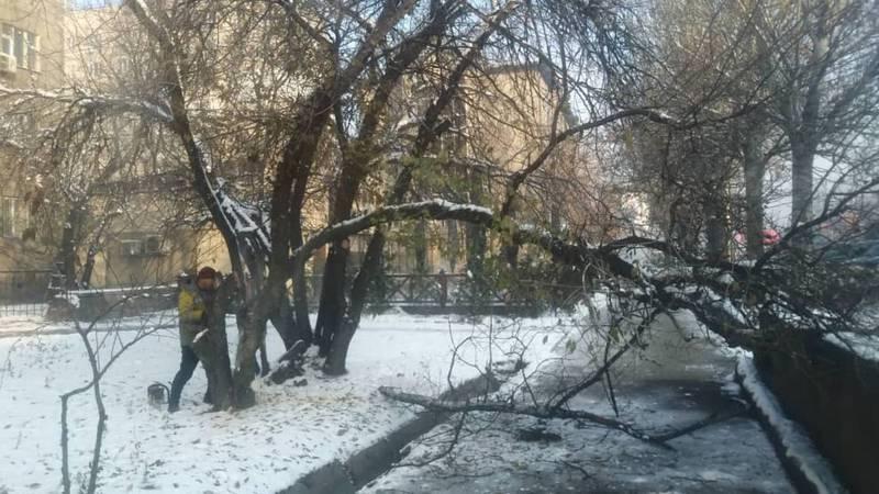 Мэрия ответила на вопрос горожанина о деревьях на Московской-Ибраимова