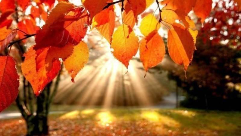 Видео — Золотая осень в Таласе