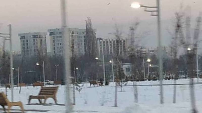 В Бишкеке наружное освещение включается в 18:00, - мэрия