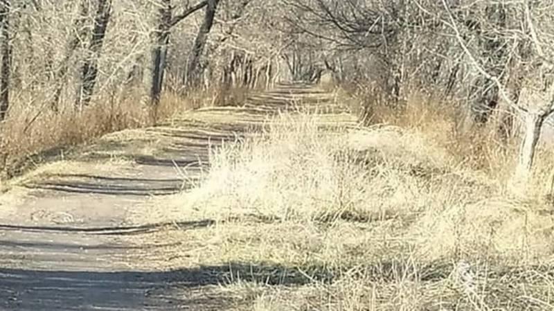 В парке Тулебердиева все еще нет урн. Фото горожанина