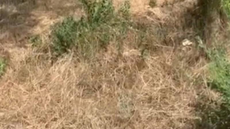 В парке Ататюрка трава высохла и может загореться. Фото горожанина