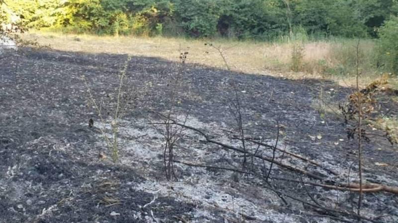 Кто заинтересован в уничтожении ботанического сада в Бишкеке? - горожанин