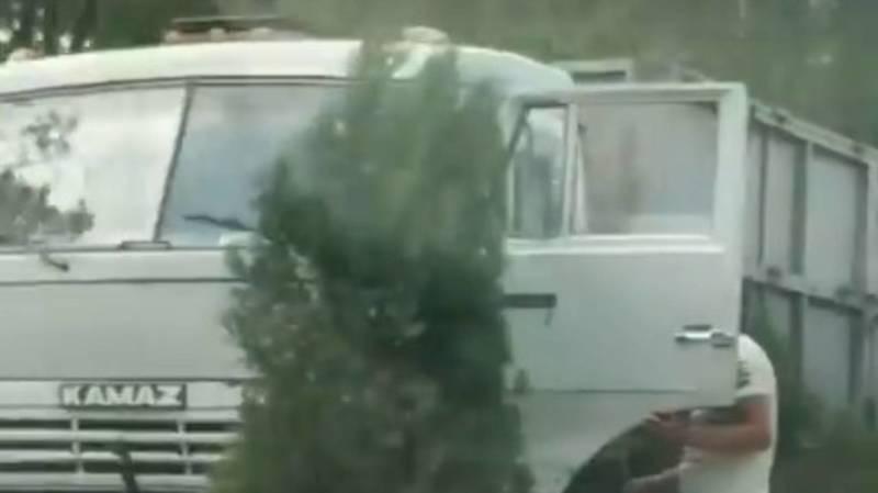 На Южной магистрали КамАЗ наехал на молодые деревья. Видео
