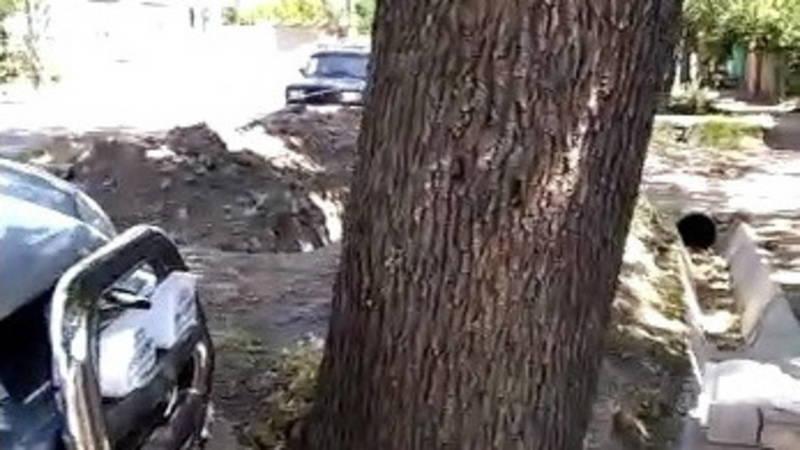 На ул.Логвиненко большой дуб может упасть на жилой дом. Видео местного жителя
